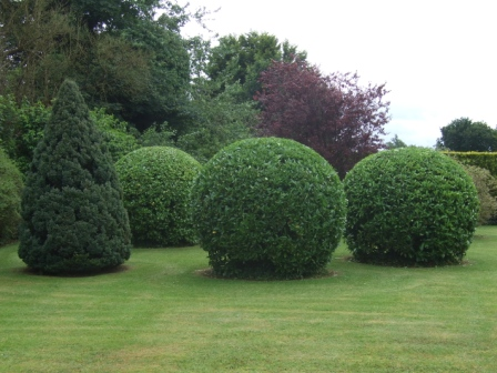 how to cut a straight hedge