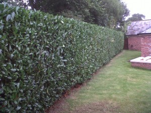 hedge cutting lisburn