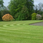 gardening services in Lisburn, Belfast, Antrim and Down